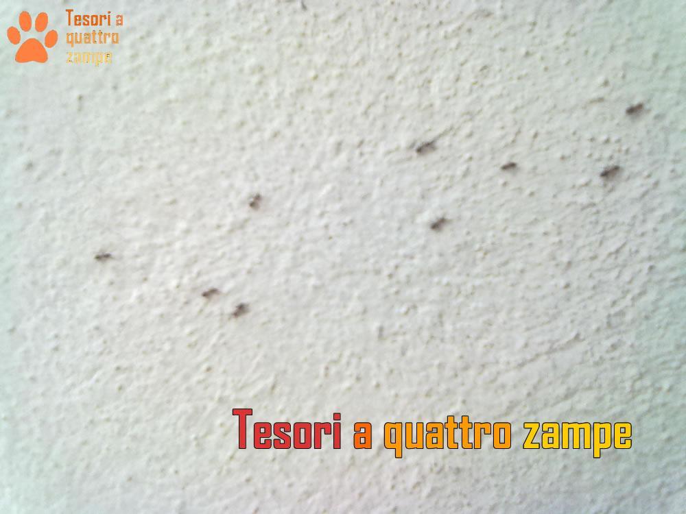 Formiche piccolissime trattamento marmo cucina - Formiche in bagno ...