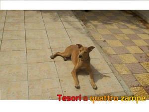 cane_pippo_francesca_panico