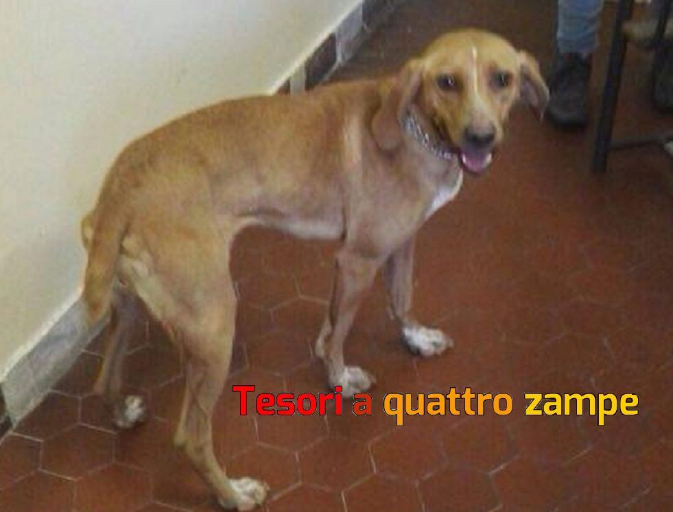 cane_scuola_magistrale_rieti_elena_battilocchi