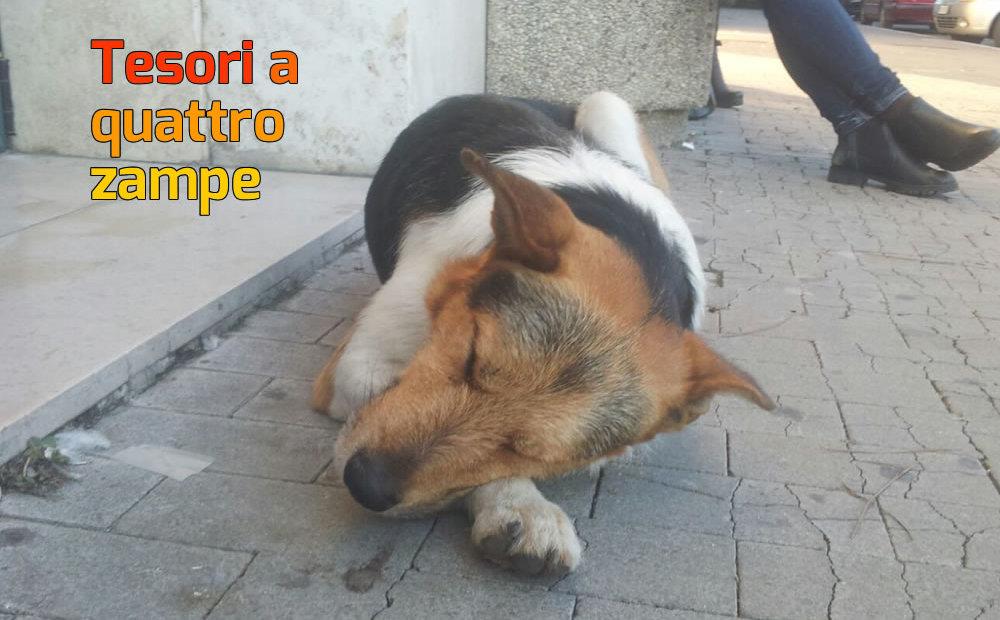 cane_stazione_rieti
