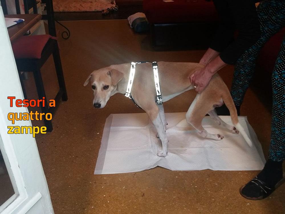 cane_chance_genova_paraplegica_rita_abrassi