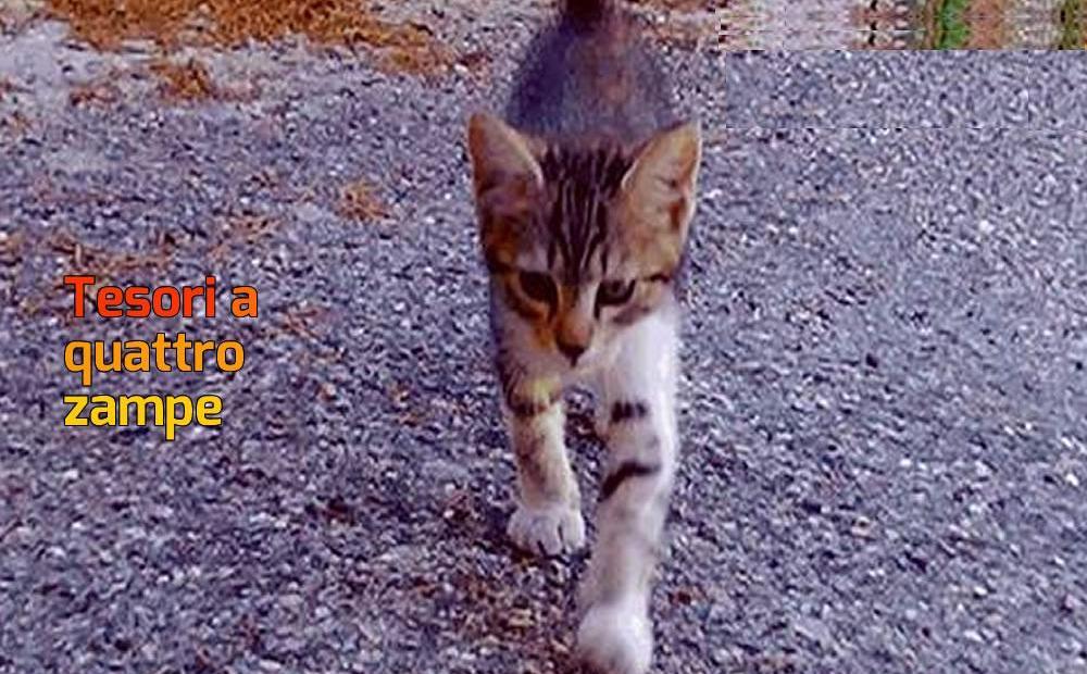 buono_gatto_gattino_