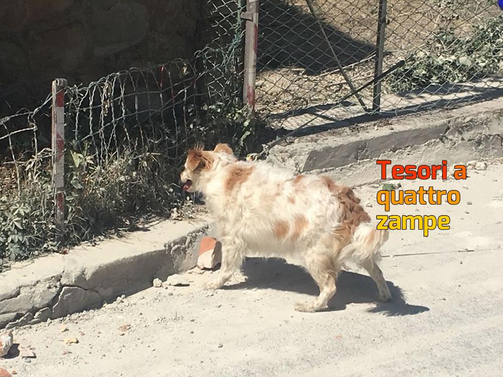 Terremoto ad oggi al punto veterinario enpa di norcia for Veterinario di punto di cabina