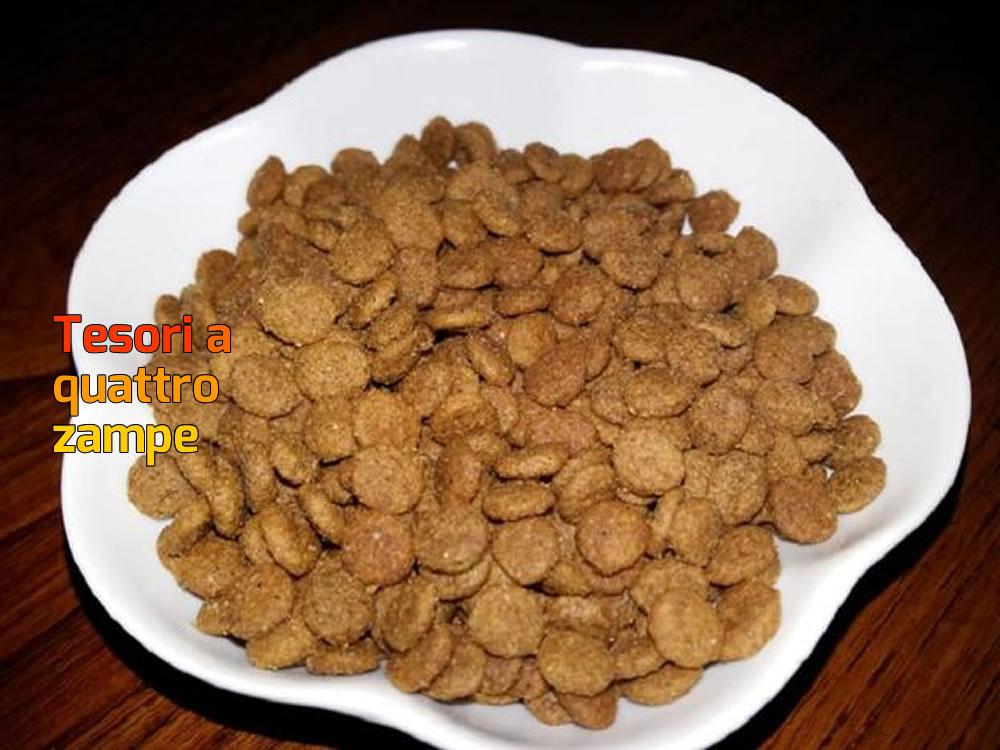 Raccolta di crocchette per i cani del Sanitario di Rieti