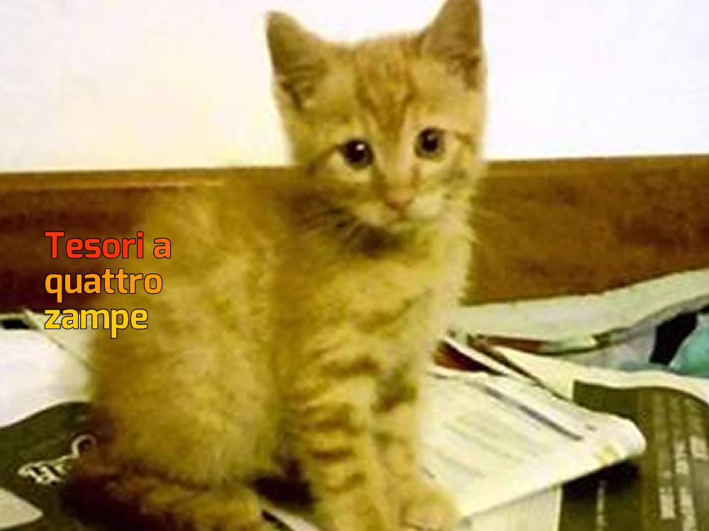 Cinque Dolci Gattini Hanno Bisogno Di Unadozione Tesoriaquattrozampe