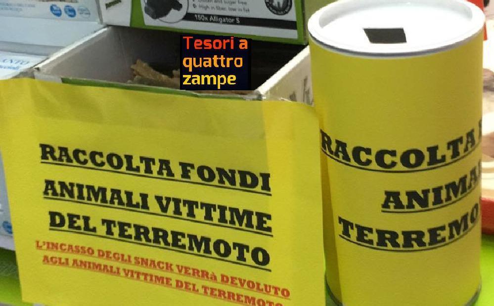 terremoto_raccolta_fondi_palenga_rieti