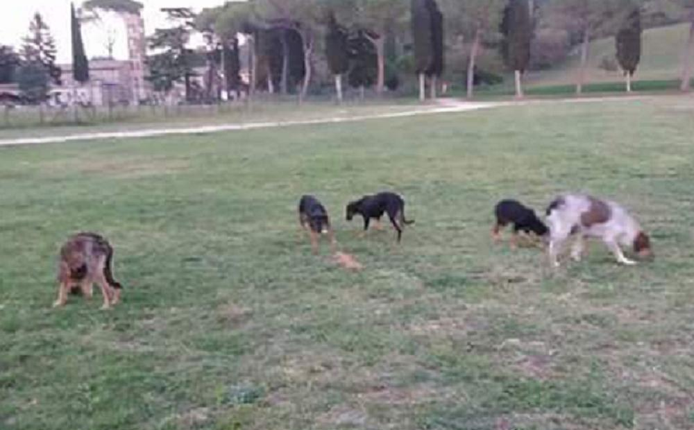 cane_cani_cucciole_sabina_pf
