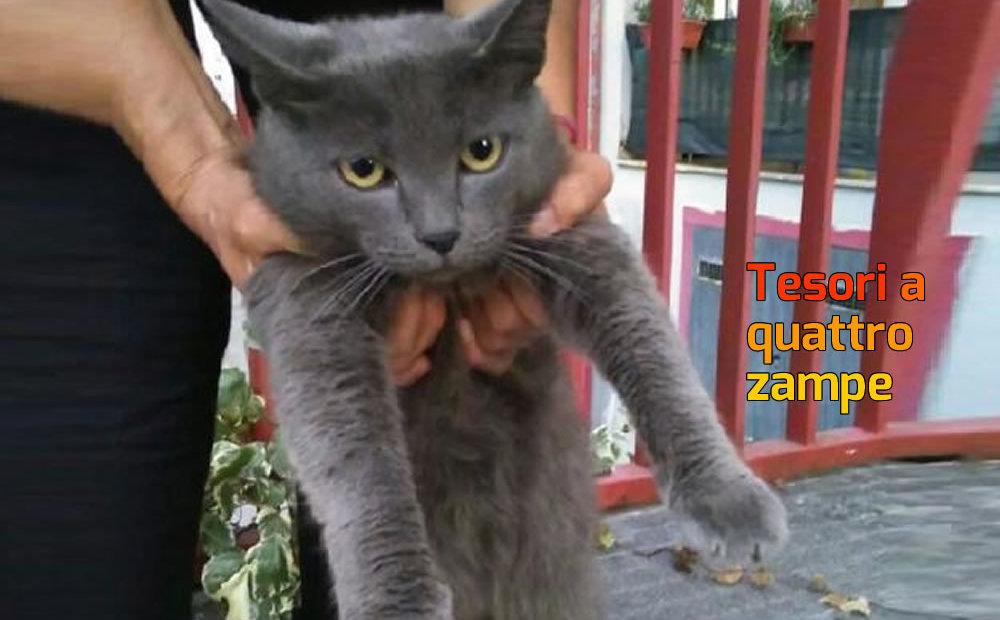 gatto_via_amelotti_raffy-624x469