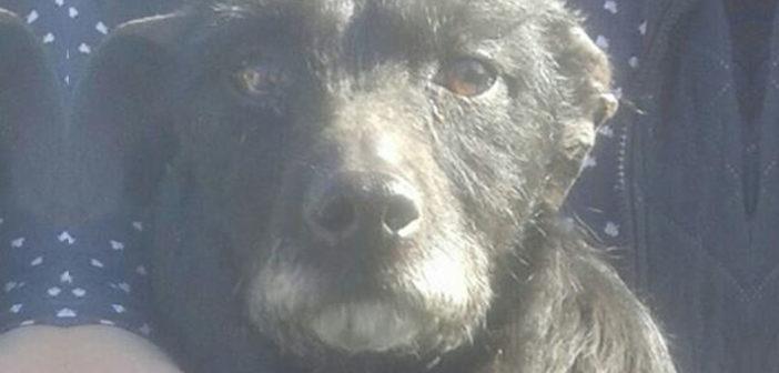 Cucciola trovata incastrata in un canale della Piana Reatina. Si cerca la famiglia