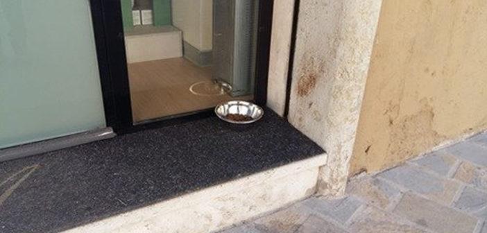 Nuova ciotola per i 4 zampe. A metterla un'attività in Piazza del Comune a Rieti