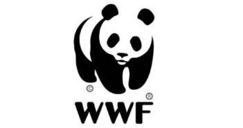 "COP24 clima, WWF: ""Da Katowice deve arrivare salto di qualità"""