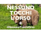 #NessunoTocchiOrso, petizione Enpa supera quota 30mila