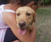 Ed ecco Winnie! Labrador ospite del Sanitario