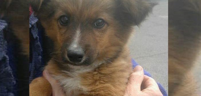 Cucciolo mantello marrone cerca adozione. Sarà in stallo ancora per poco tempo