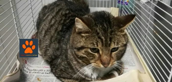 Nuova donazione per il gattino di via Salaria per L'Aquila. Grazie!
