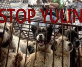 Il massacro di Yulin, oltre 10mila cani trucidati nell'indifferenza