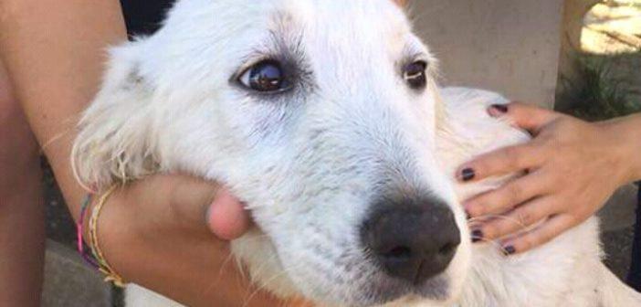 Adottato il cucciolo dell'Eurospin di Poggio Mirteto Scalo