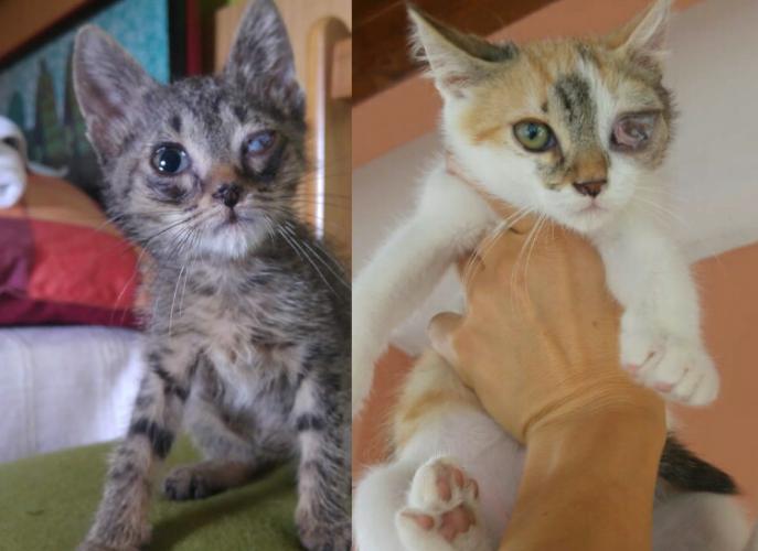 Gatti carinissimi in cerca di casa e famiglia