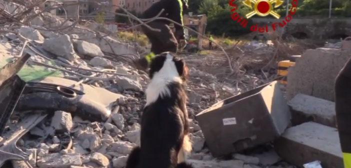 Crollo ponte Morandi a Genova, unità cinofile in azione – VIDEO