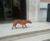Trovato davanti alla scuola di Poggio Mirteto, chi lo riconosce?