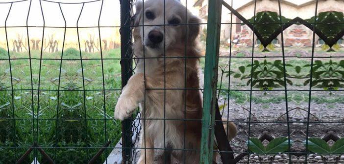 Messo in sicurezza il cagnolino trovato abbandonato a Rieti
