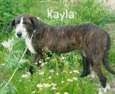 Canile Sanitario di Rieti, Kayla è da troppo tempo dentro il box!