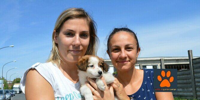 Adottati i cuccioli presenti al Sanitario di Rieti. In foto Charles