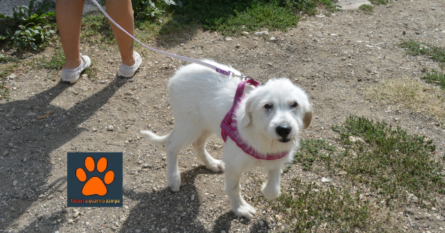 Sanitario Rieti, la cucciola Lara cerca adozione