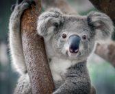 """WWF: """"Al mondo serve un accordo per la natura"""". Popolazioni di vertebrati diminuite del 60%"""