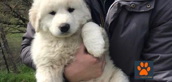 Nessuna notizia di questo cucciolo smarrito nel nulla