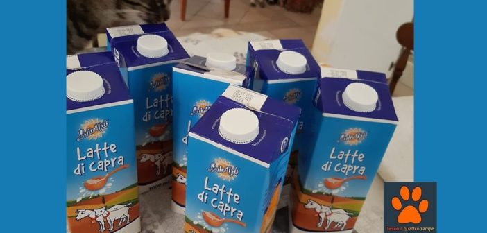 Giunto a destinazione il latte donato al cucciolo trovato in superstrada tra Rieti e Terni