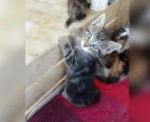 Gatti e gattini senza casa nè famiglia