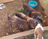 """Rieti, i cuccioli """"spelacchiati"""" stanno diventando bellissimi! Cercano adozione"""