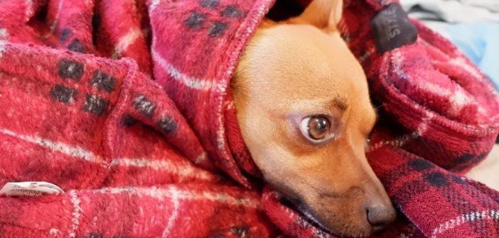 """Arriva la stagione fredda, l'appello LNDC: """"Dona coperte ai cani dei rifugi"""""""