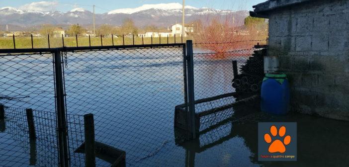 Esondazioni nel reatino, stalle allagate e famiglie in difficoltà
