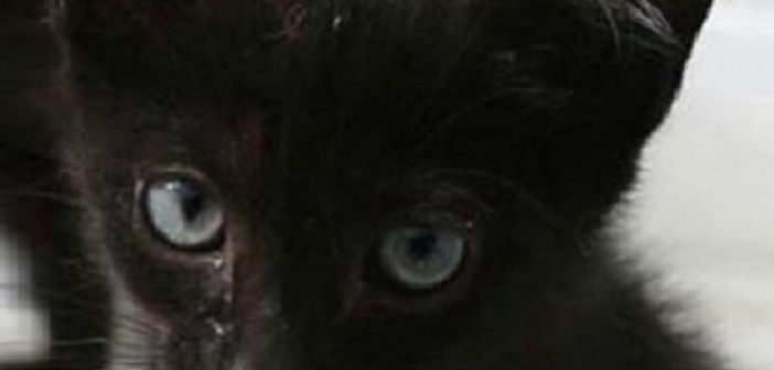 Halloween, proteggiamo i gatti neri da pessime antiche usanze