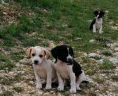 Tre maschietti dalla provincia di Rieti sono disponibili ad entrare nella tua vita