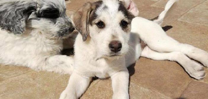 Monterosi di Viterbo, cucciole attendono con ansia un'adozione