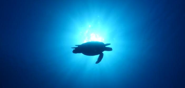 VIDEO WWF – Col nostro inquinamento mettiamo a rischio la sopravvivenza delle Tartarughe Marine
