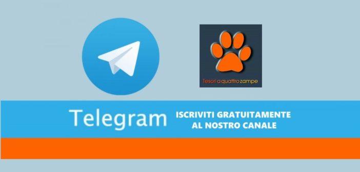 Da oggi trovi Tesori a quattro zampe anche su Telegram. Per ricevere le notizie iscriviti gratuitamente al nostro canale