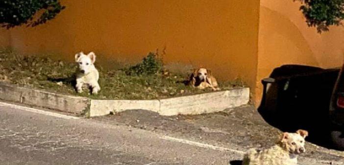 Aggiornamento sui tre cani segnalati in strada a Passo Corese