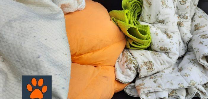 Donate a Tesori a quattro zampe calde coperte per cani senza famiglia. Grazie a Monica e Daniele