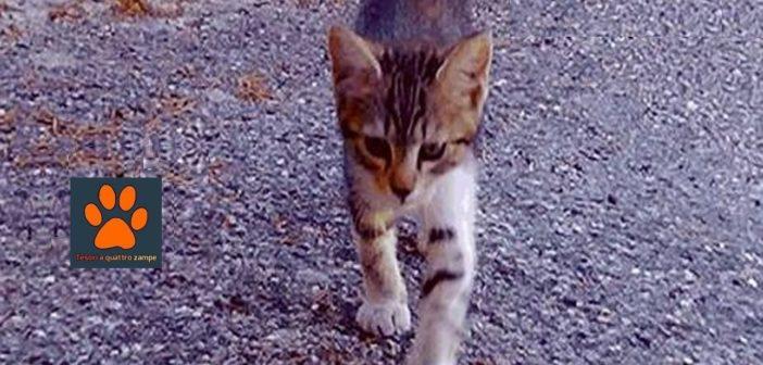 Ci chiedono aiuto per gattini con giardia. Serve medicinale Panacur