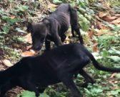 Frosinone, recuperata mamma pelle ed ossa con otto cuccioli al seguito di cui tre scheletrici
